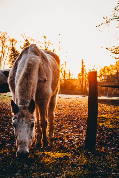 Brown Horse during Golden Hour Close-up Photography