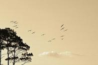 flight, nature, sky