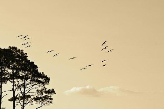 Black Birds Flying Near Black Leaf Tall Trees