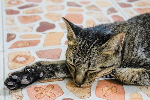 Foto profissional grátis de acasalar, adorável, animal, animal de estimação
