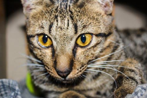 一, 動物, 可愛, 可愛的 的 免費圖庫相片