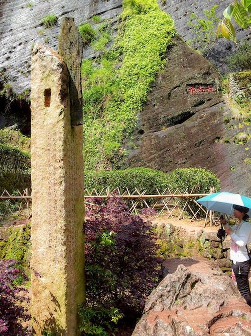 Gratis lagerfoto af bjergside, kalksten, Kina, klatreplante
