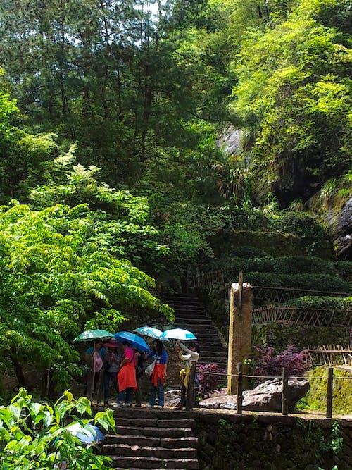 Gratis lagerfoto af blå paraplyer, grønne træer, Kina, monument