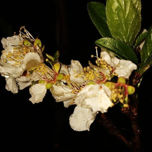 Ingyenes stockfotó eső után, virágok témában