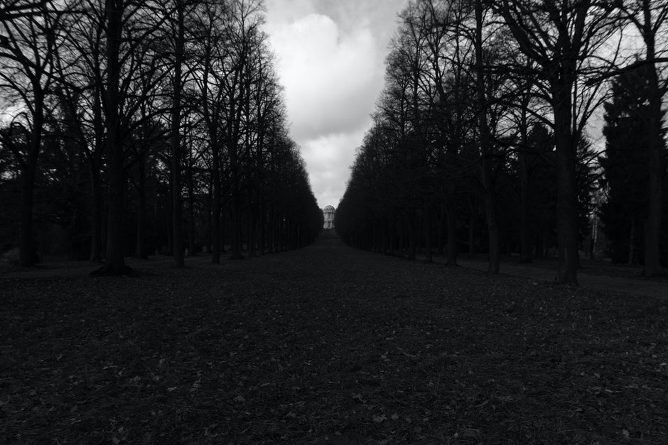 black-and-white, germany, park