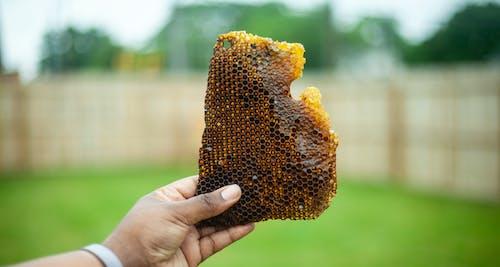 Бесплатное стоковое фото с detroithives, urbanbeekeeping, городское пчеловодство, городское хозяйство