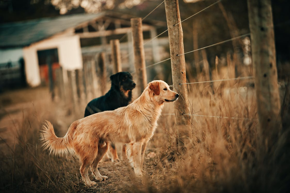 Photo of Dogs Near Fence