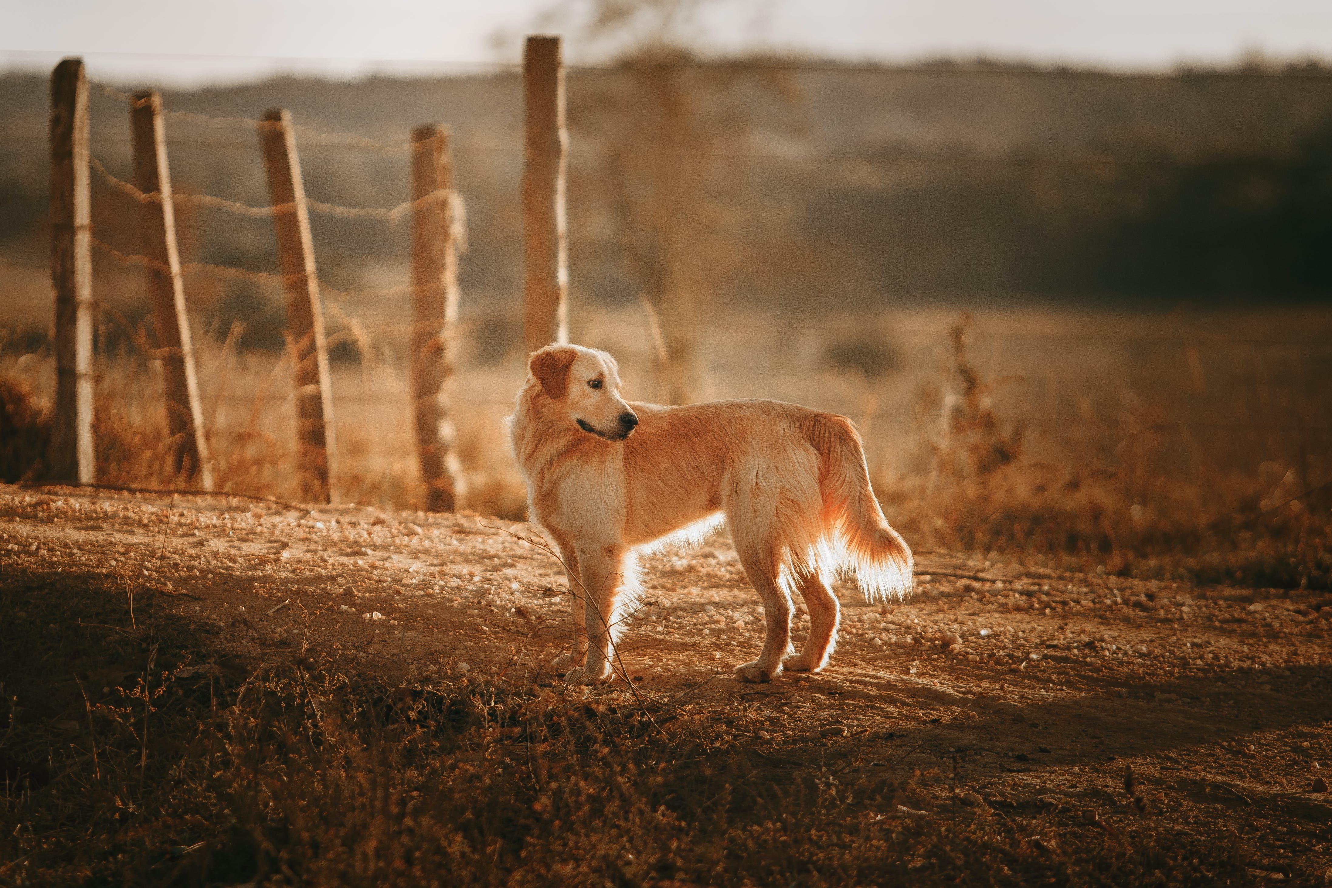Photo Of Dog On Dirt Road