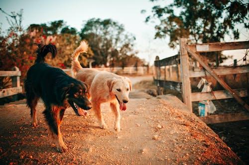 Imagine de stoc gratuită din adorabil, animal de casă, animal de companie, animale