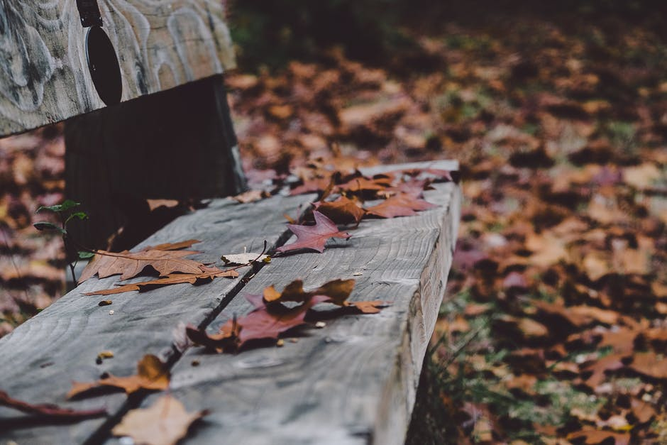autumn, bench, dry leaves