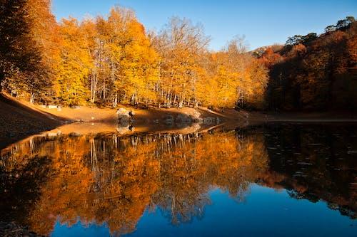 光の反射, 反射, 森林, 自然の無料の写真素材