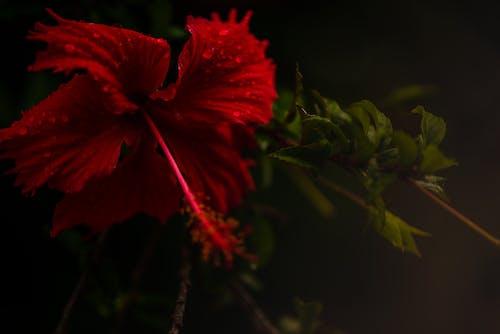 Gratis stockfoto met bloem