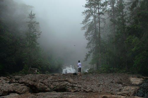 Foto profissional grátis de árvores, cênico, céu, enevoado
