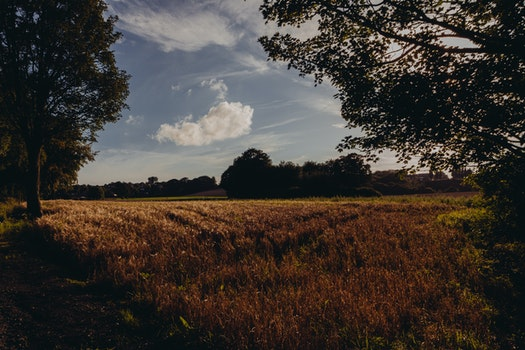 Free stock photo of field, agriculture, grass, cereals