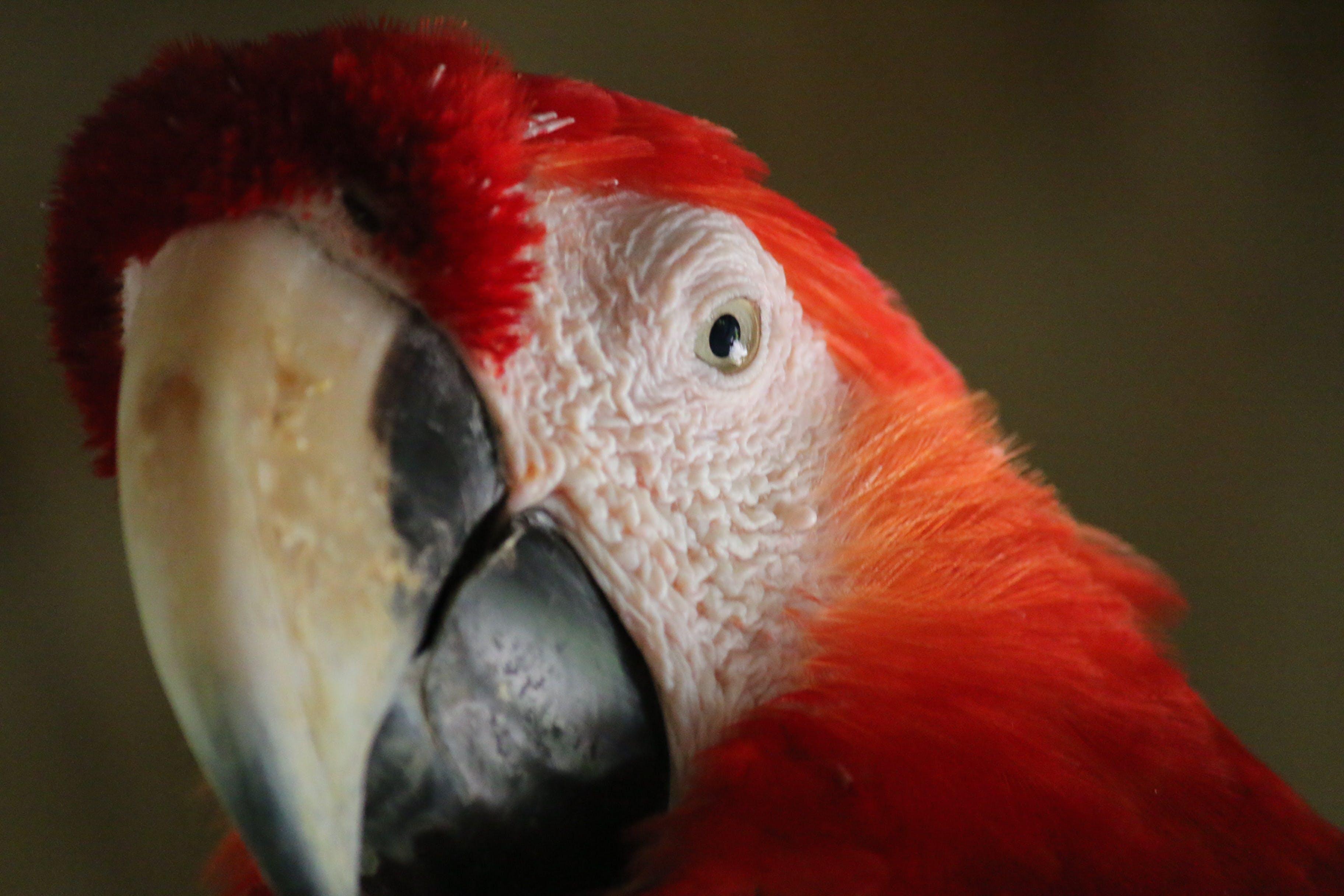 Free stock photo of animal, animals, birds eye view, birds of paradise