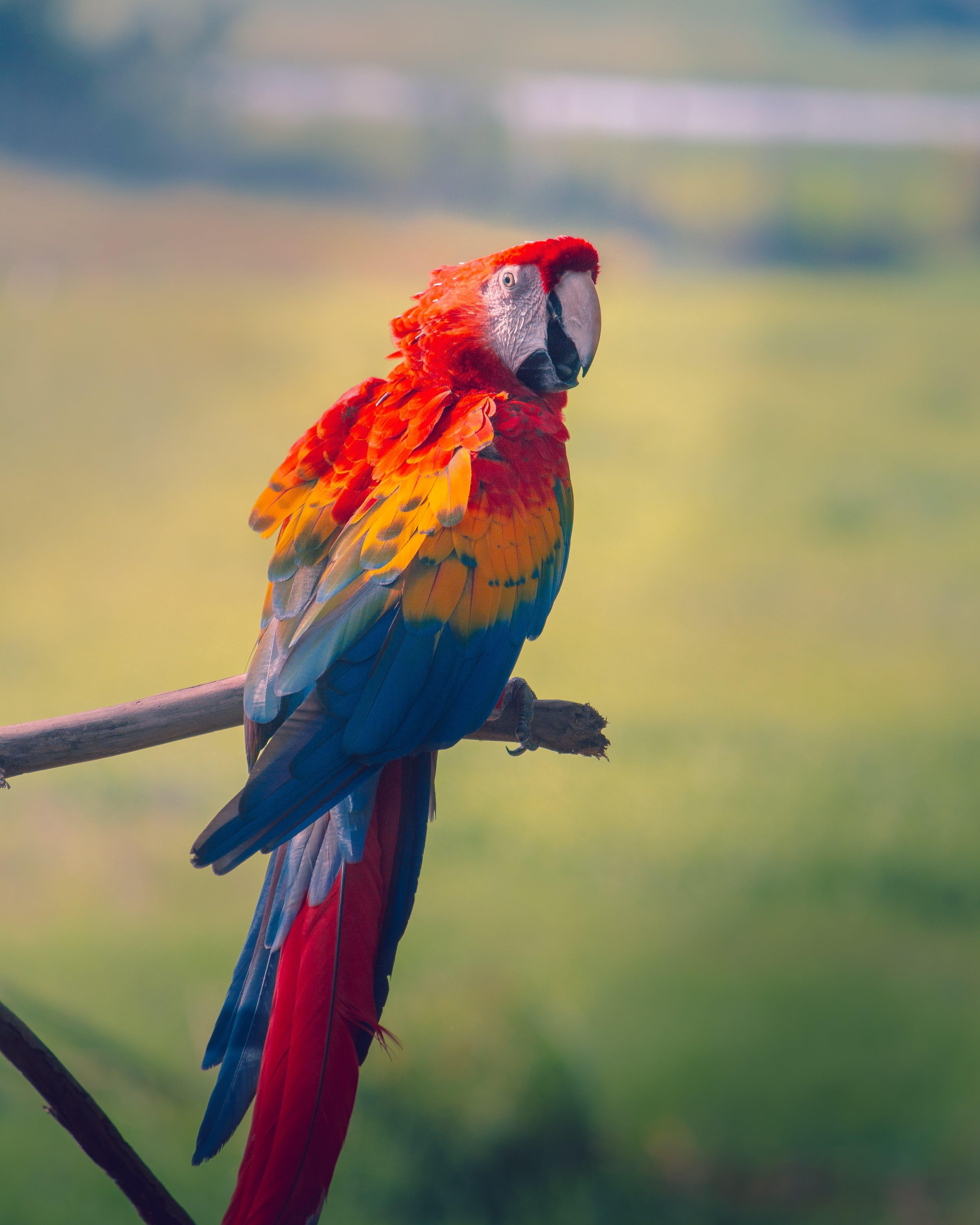 Free stock photo of animal, animals, colors, gamut