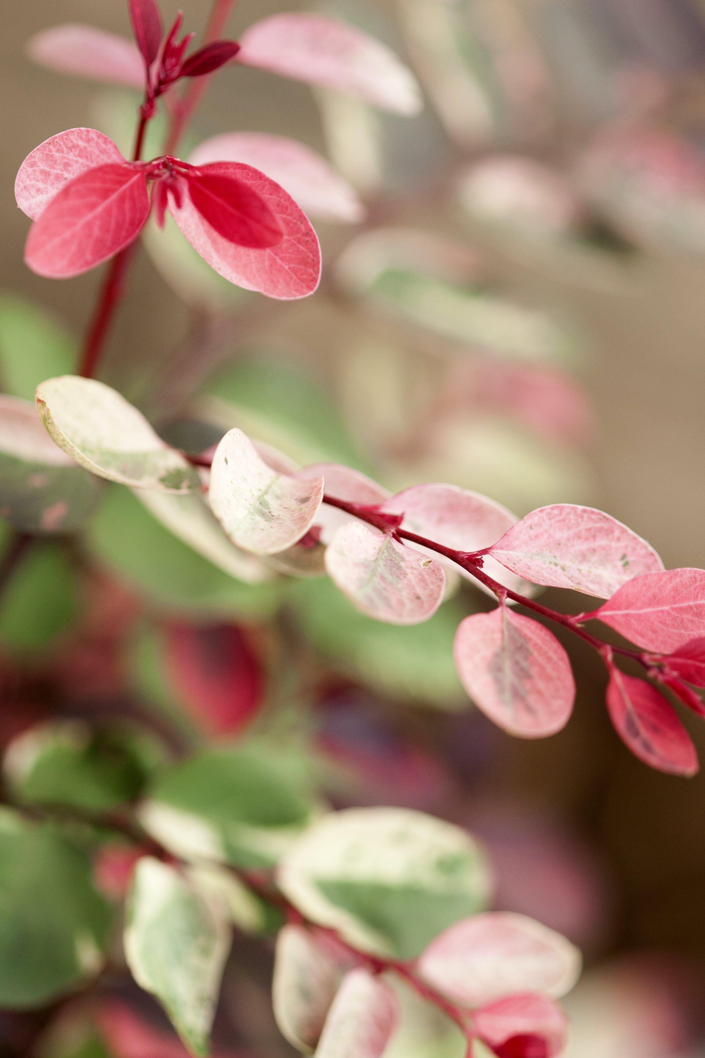 Kostenloses Stock Foto zu herbstlaub, natur, rosa blätter