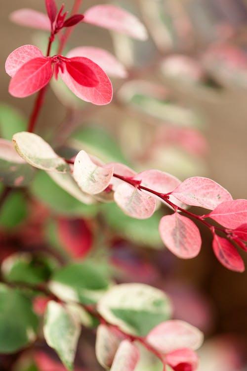 Fotobanka sbezplatnými fotkami na tému listy na jeseň, príroda, ružové listy