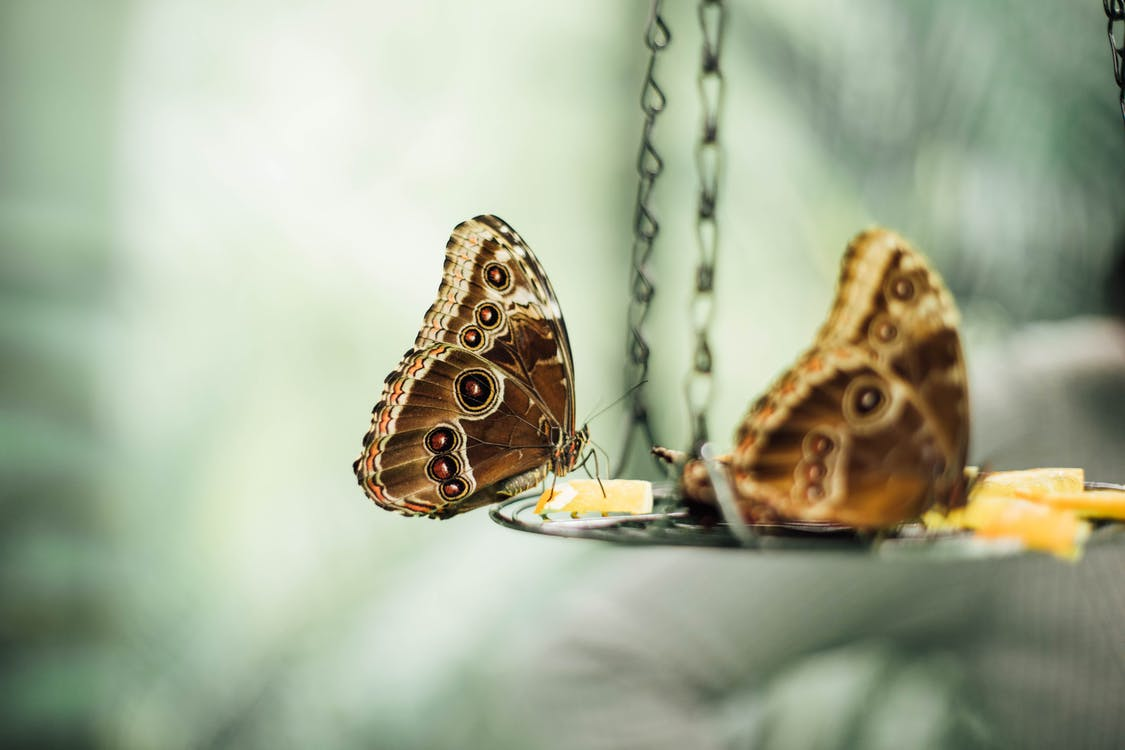 Macro Photography Of Butterfly