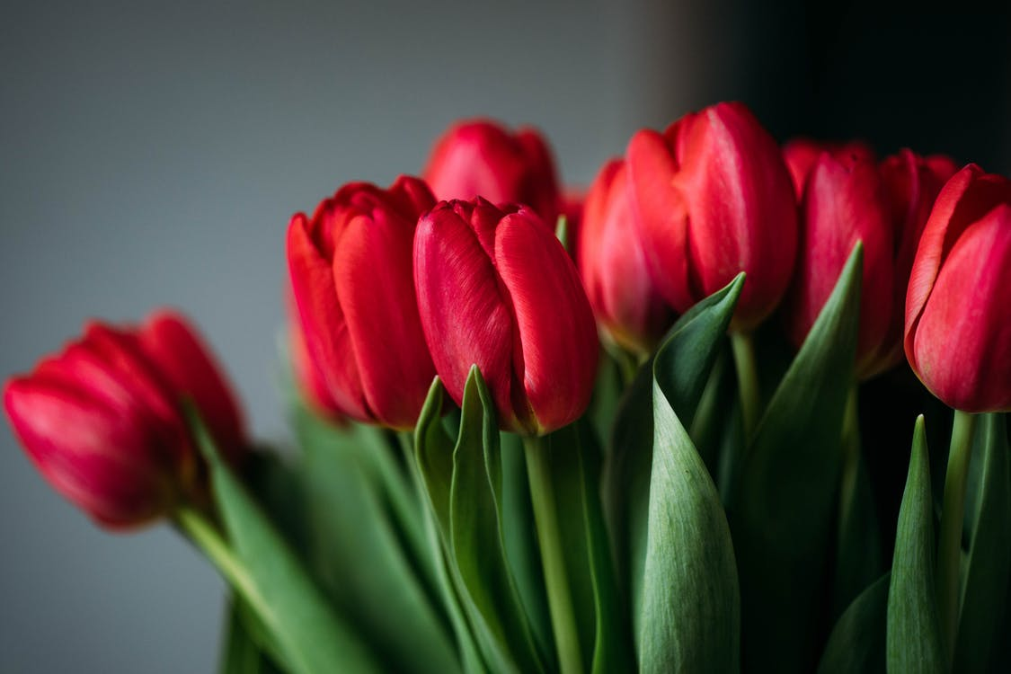 Close-up Photo of Red Flowers