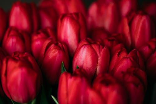 คลังภาพถ่ายฟรี ของ กลีบดอก, การเจริญเติบโต, กำลังบาน, ช่อดอกไม้