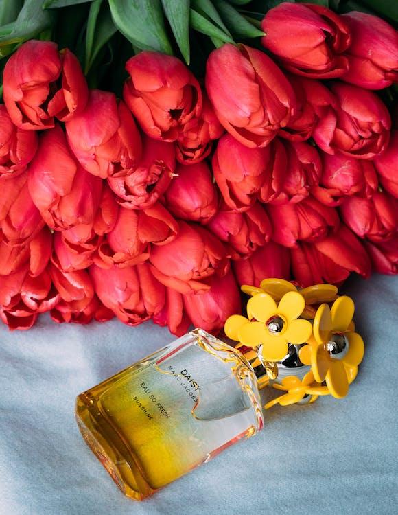 aroma, blomst, blomster