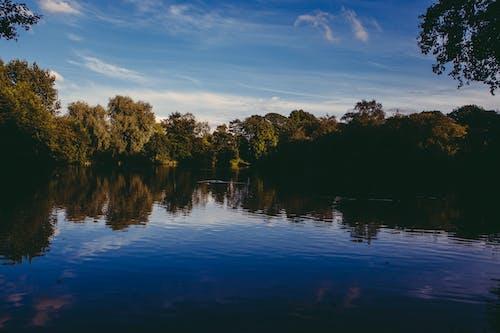 Δωρεάν στοκ φωτογραφιών με δασικός, δάσος, δέντρα, θάλασσα