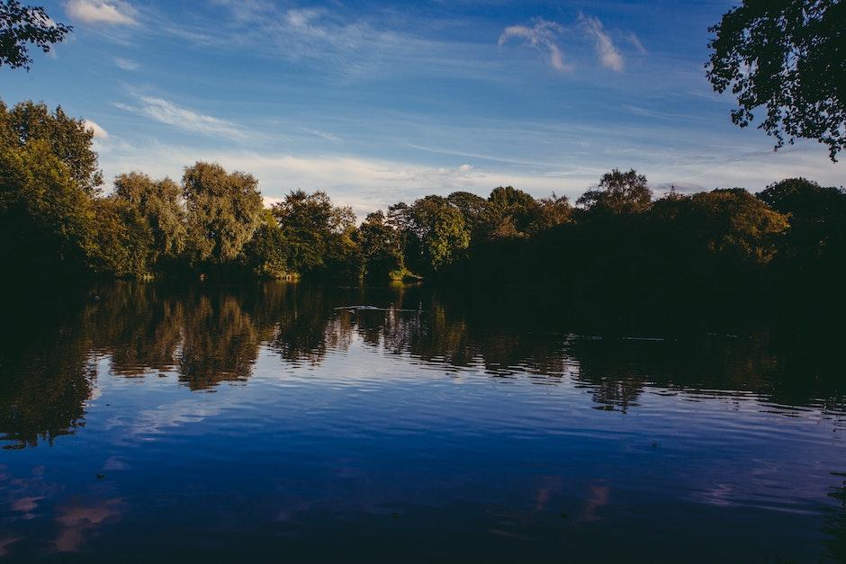 forest, lake, landscape