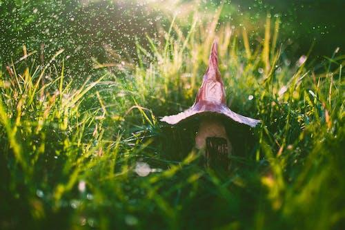 Ilmainen kuvapankkikuva tunnisteilla puutarha, ruoho