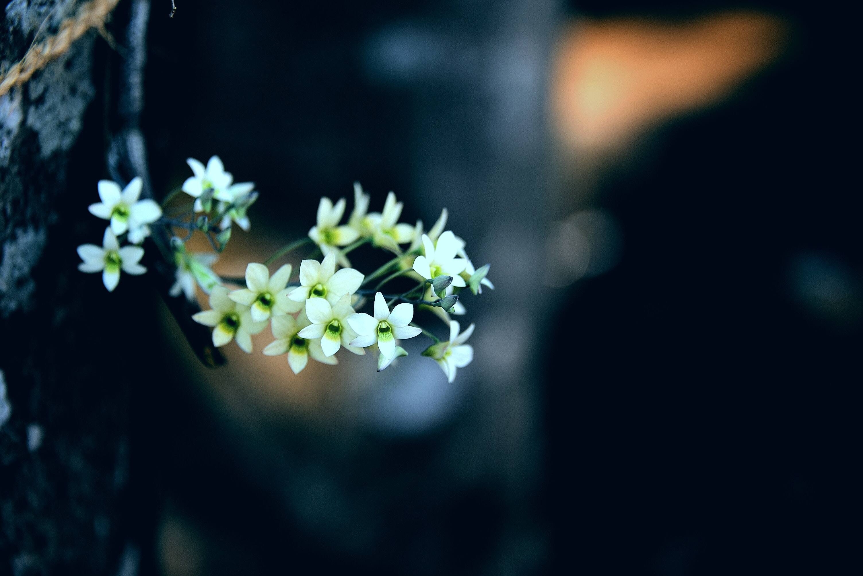 Kho ảnh miễn phí về hoa dại, hoa đẹp
