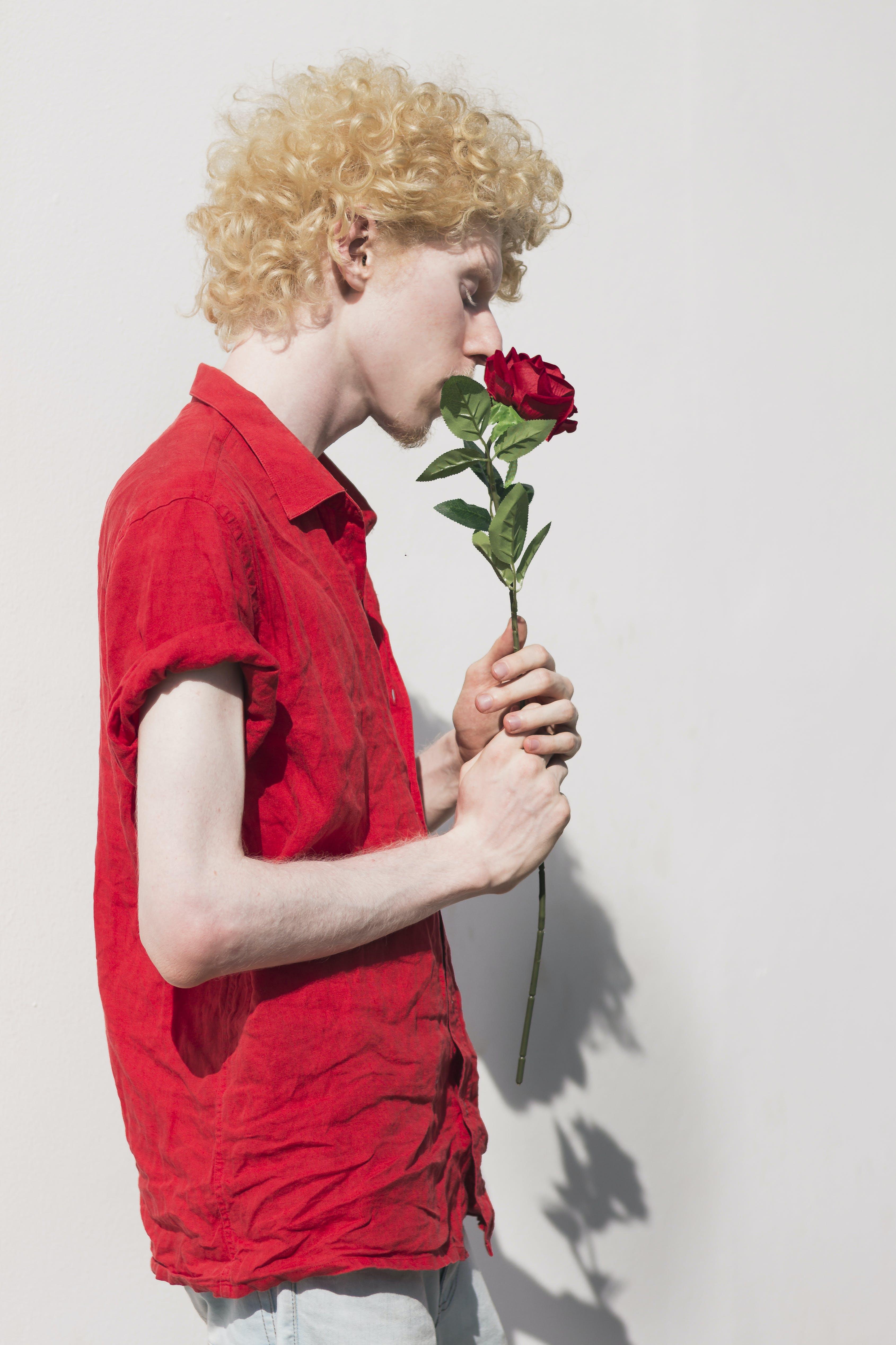 Základová fotografie zdarma na téma albín, červené růže, na výšku, pexels