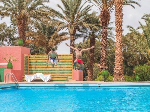 度假村, 挖出來的游泳池, 日光, 棕櫚樹 的 免费素材照片