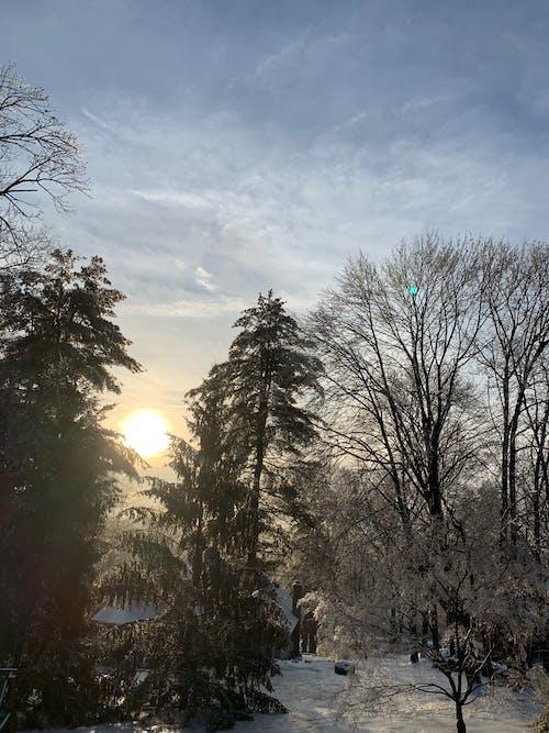 Бесплатное стоковое фото с зима, лед, снег, солнце