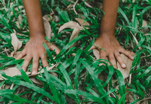 Free stock photo of blade of grass, green, hands