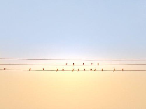 Darmowe zdjęcie z galerii z ptaki