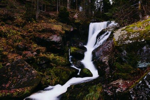Δωρεάν στοκ φωτογραφιών με δασικός, δάσος, Καταρράκτης, νερό