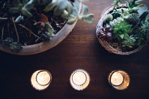 ev bitkileri, iç mekan bitkileri, mumlar içeren Ücretsiz stok fotoğraf