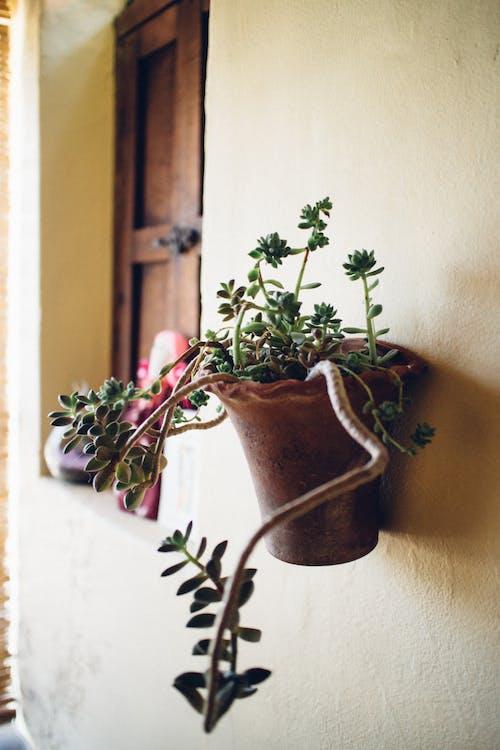 ev bitkileri, iç mekan bitkileri, Meksika içeren Ücretsiz stok fotoğraf