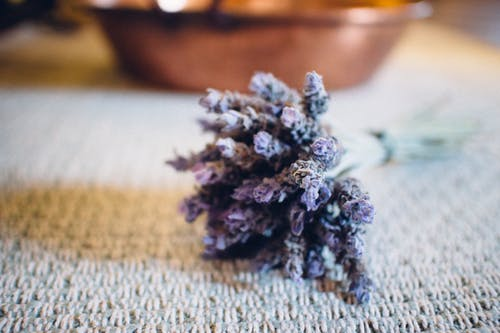 Çiçekler, kuru çiçekler, lavanta içeren Ücretsiz stok fotoğraf