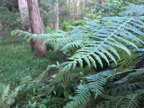 Free stock photo of bush, fern, green
