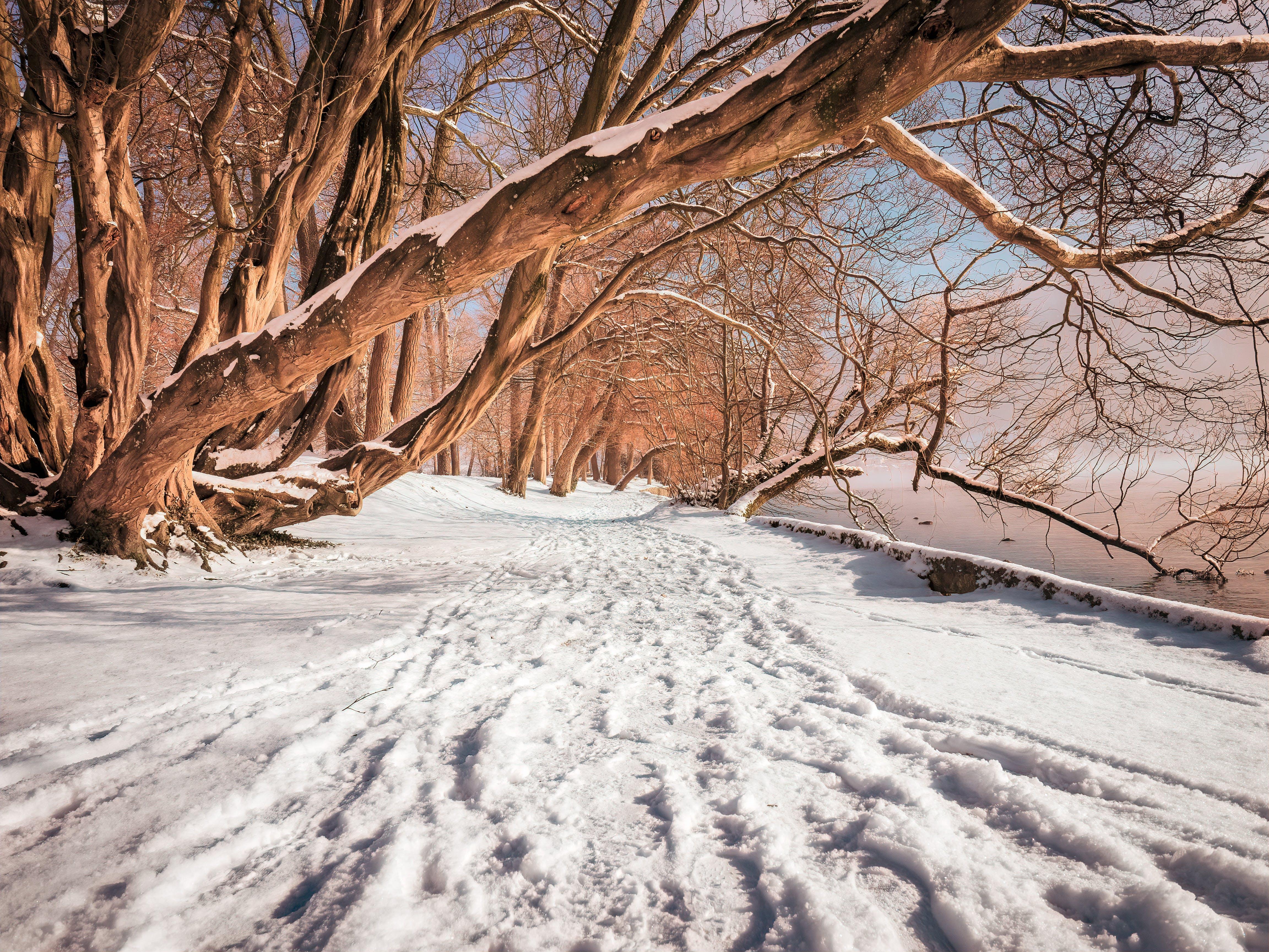 冬季, 冬季路径, 冷, 奧地利 的 免费素材照片