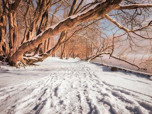 Photos gratuites de arbres, autriche, chemin, froid