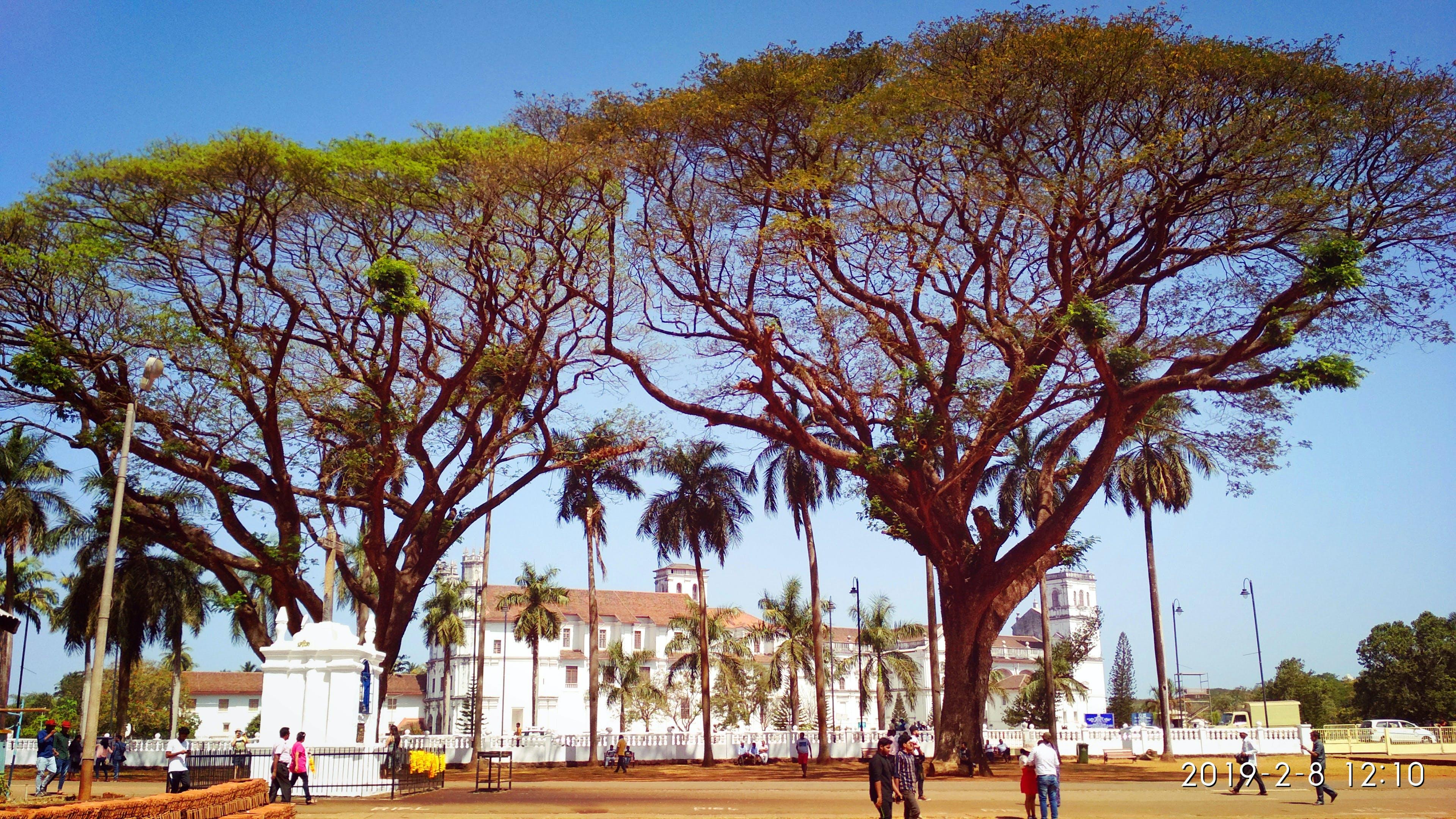 Základová fotografie zdarma na téma #strom