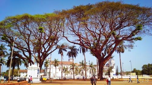 Fotos de stock gratuitas de #árbol