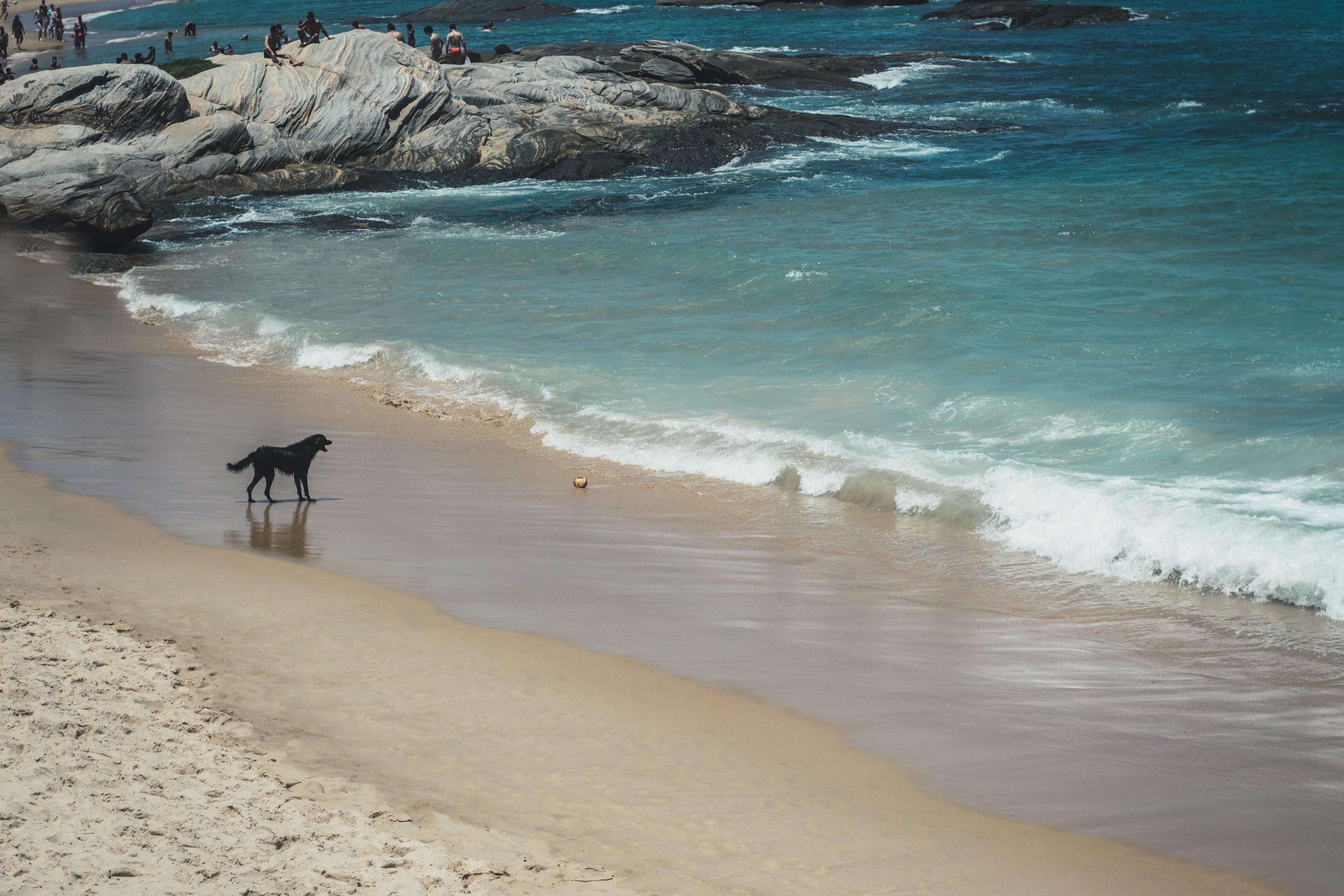 Immagine gratuita di acqua, animale, animale domestico, bagnasciuga