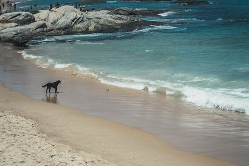 Photo of Dog By The Beach