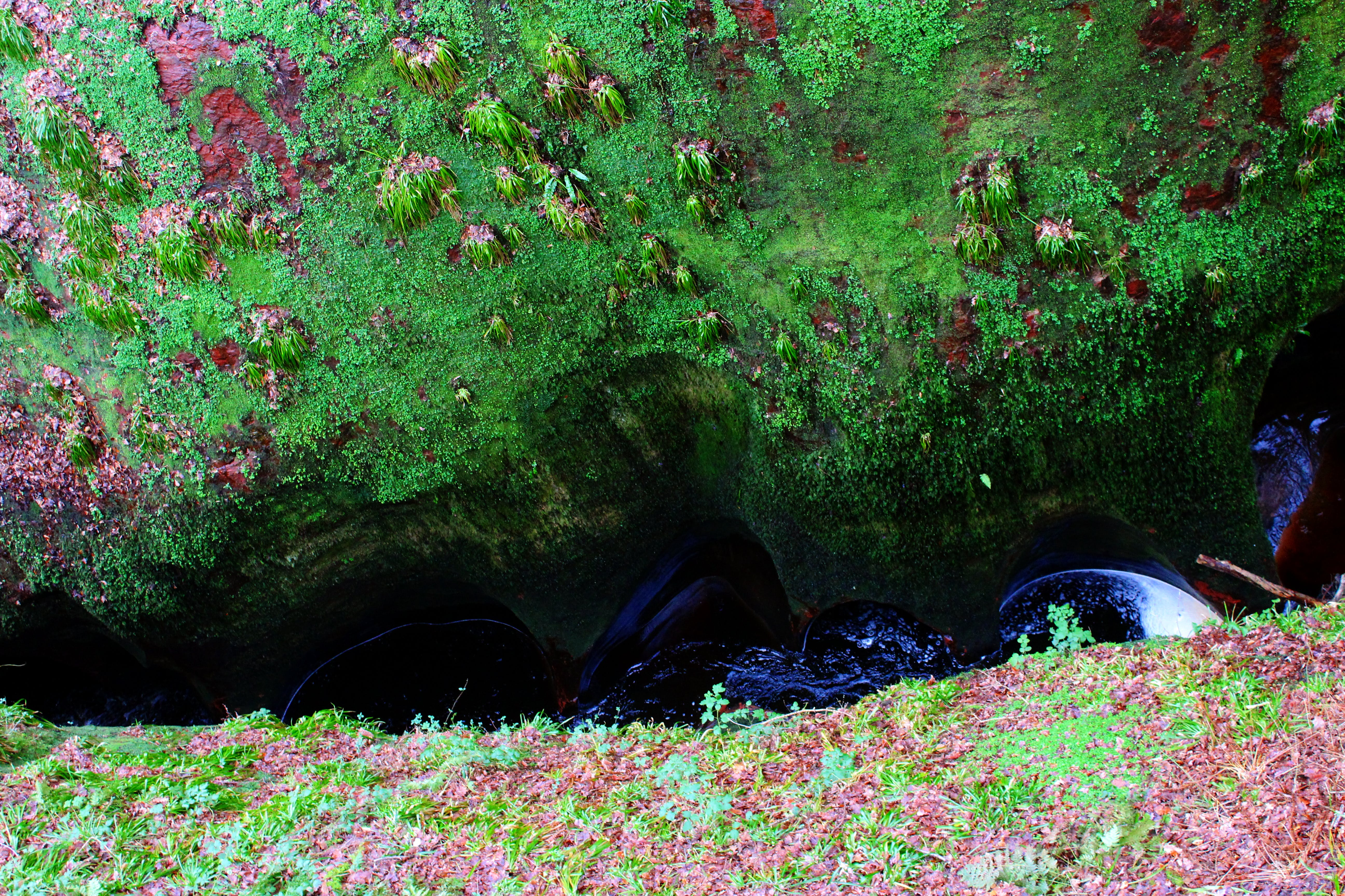 Free stock photo of devil's pulpit canon, rebel panda