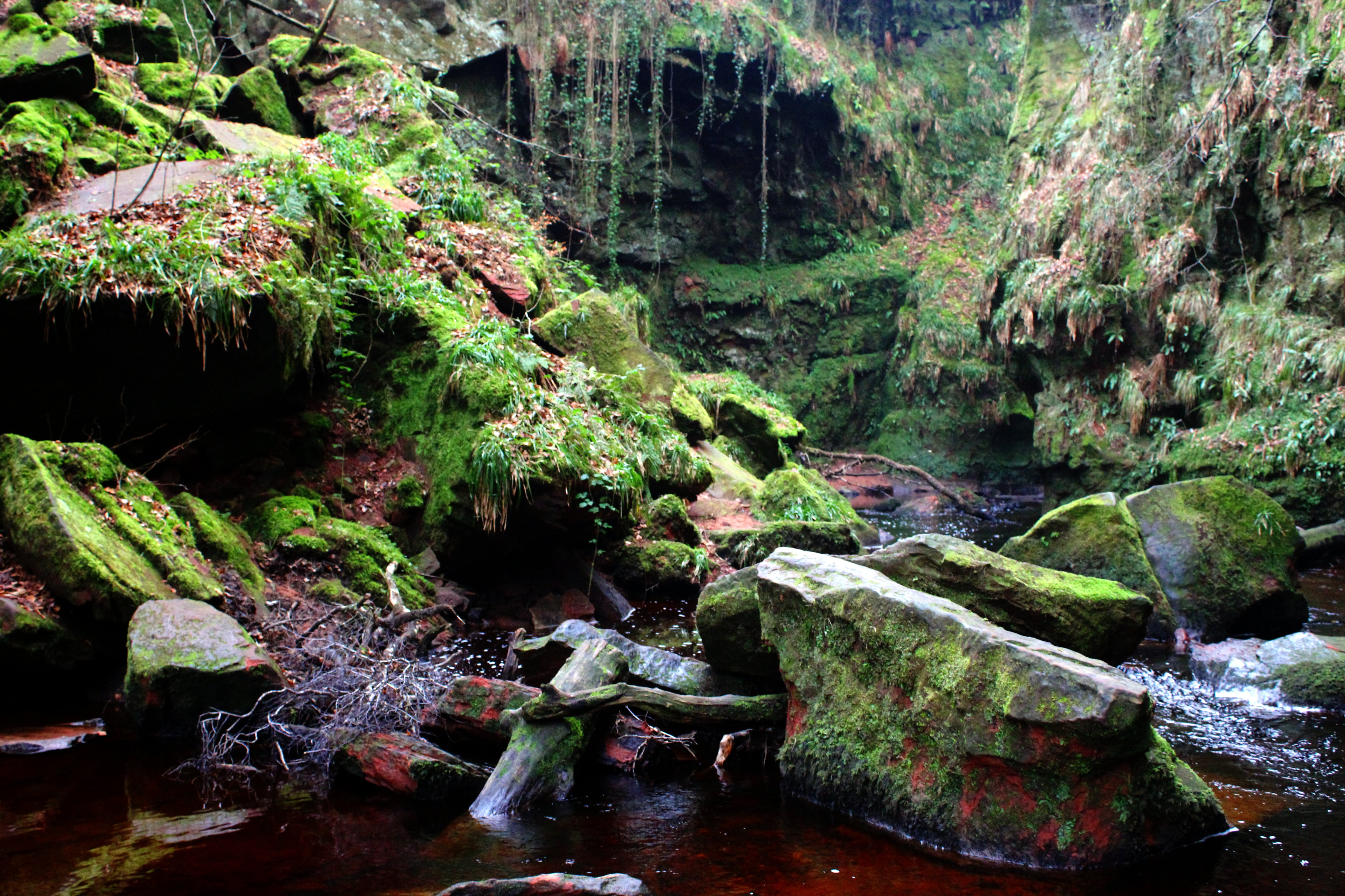 Free stock photo of devils pulpit, rebel panda