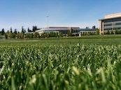 grass, lawn, sports field