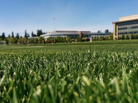 Free stock photo of grass, lawn, sports field, turf